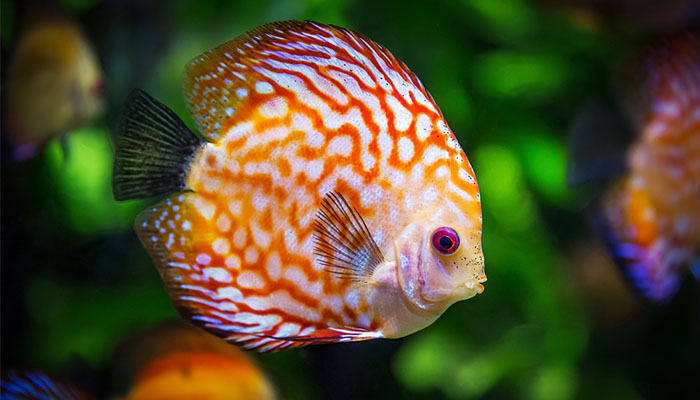 5 Best Aquarium CO2 Regulators