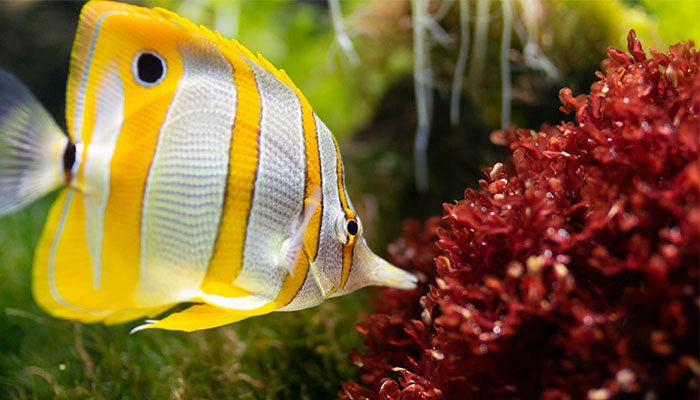 5 Best Canister Filters for Aquariums